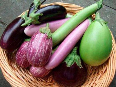Семена ГАВРИШ- гарантия качества. В пути — БАКЛАЖАН — Семена овощей