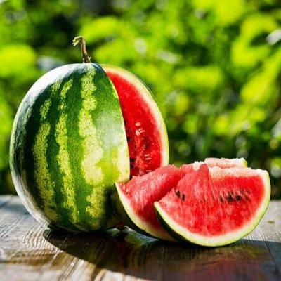 Семена ГАВРИШ- гарантия качества. В пути — АРБУЗ — Семена овощей