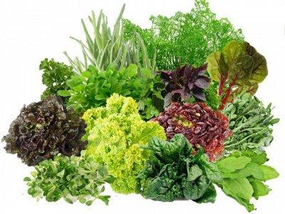 Семена ГАВРИШ- гарантия качества. В пути — СВЕЖАЯ ЗЕЛЕНЬ — Семена овощей