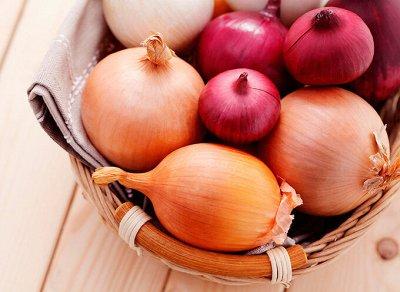 Семена ГАВРИШ- гарантия качества. В пути — ЛУК — Семена овощей