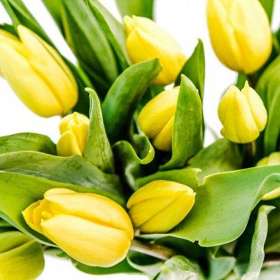 Озимые лук-севок и чеснок в наличии! Таких цен не бывает! — Тюльпаны! 🌷  — Семена многолетние