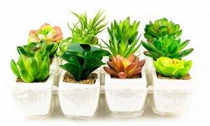 Цветы TY9015-2 Суккуленты в кашпо H9см 5х5см пластик