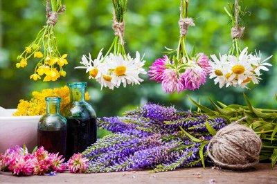 Мёд и Конфитюр🌺 Сладко- Здорово Жить — Травы* Сборы — Чай
