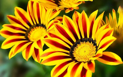 Семена Аltая Цена за 2 пачки — Цветы разные однолетние — Семена однолетние