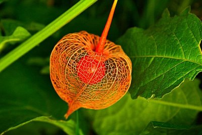 Товары на любой вкус и кошелек Актуальное наличие — ЭКЗОТИКА, комнатные цветы, лекарственные травы — Семена однолетние