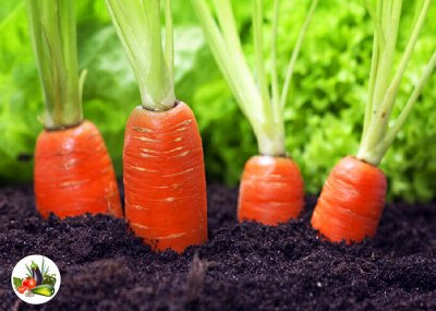 Товары на любой вкус и кошелек Актуальное наличие — ОВОЩИ:  КАБАЧОК, КАПУСТА, ЛУК, МОРКОВЬ, ТЫКВА — Семена овощей