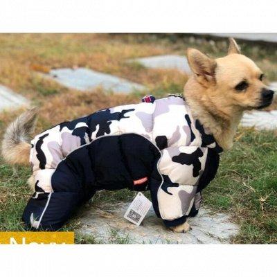 Отличные носки! Колготки! В школу, в сад! Нижнее белье! — Зоотовары, товары для дома — Для собак