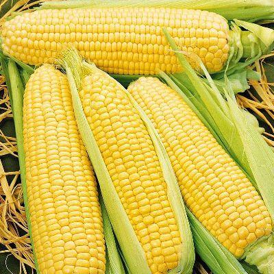Дачный сезон! НЕ ПРОПУСТИ! Более 2000 видов семян!   — Семена Кукурузы — Семена овощей