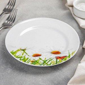 Тарелка мелкая «Ромашка», 17 см