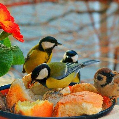 Для животных. Много новинок: корма, наполнители, лакомства — Корма для птиц — Корма