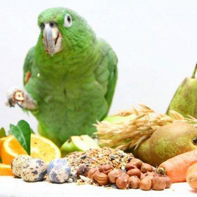 Для животных. Много новинок: корма, наполнители, лакомства — Лакомства/Витамины птицы — Лакомства и витамины