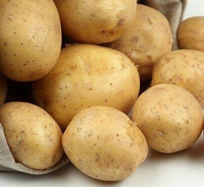 ✔Весенний предзаказ: Луковичные и Саженцы — КАРТОФЕЛЬ СЕМЕННОЙ — Семена
