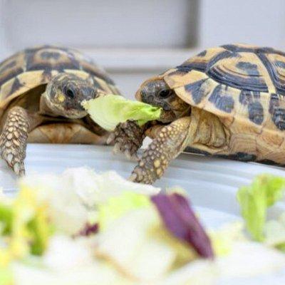Для животных. Много новинок: корма, наполнители, лакомства — Корм для рептилий — Для рыб и рептилий
