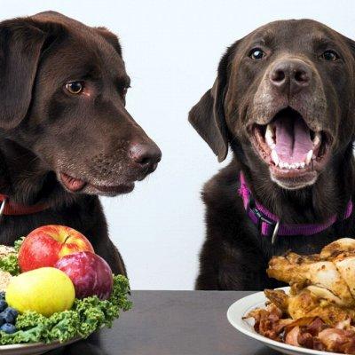 Для животных. Много новинок: корма, наполнители, лакомства — Витамины/Функциональное питание — Лакомства и витамины