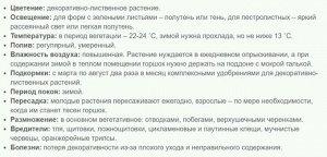 Хедера Хеликс Уайт Вондер