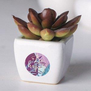 Суккулент в керамическом горшочке Be happy. 7.5 ? 5.5 ? 6 см
