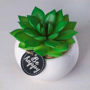 Суккулент в керамическом горшочке Be happy. 7 ? 7.5 ? 7.5 см