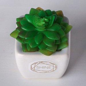 Суккулент в керамическом горшочке Shine. 7.5 ? 5.5 ? 6 см