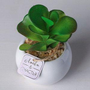 Суккулент в керамическом горшочке «Любви и счастья». 9.5 ? 7.5 ? 7.5 см