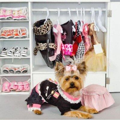 😺Ушки, лапки, хвостики. Популярная закупка для любимцев  — Плечики для одежды собак и кошек — Аксессуары и одежда