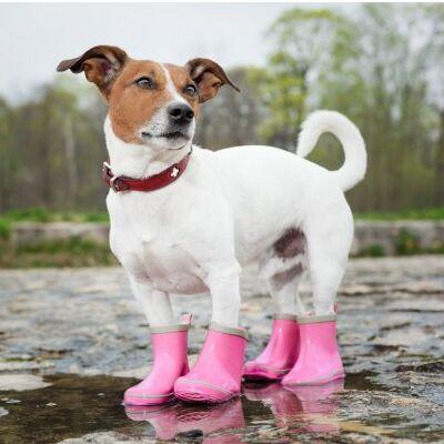 😺Ушки, лапки, хвостики. Популярная закупка для любимцев  — Носочки и ботиночки для животных — Аксессуары и одежда