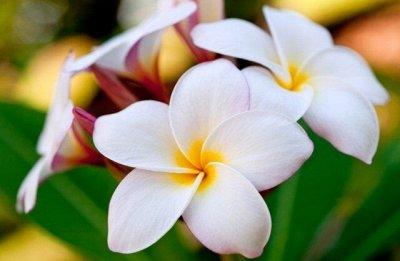 Из Тайланда с любовью! Вся косметика!  — Новинки Тайланд! — Для тела