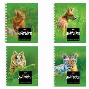 "Тетрадь А5, 48 л., HATBER, гребень, клетка, обложка картон, ""WILD NATURE"" (4 вида), 48Т5В1гр, T243190"