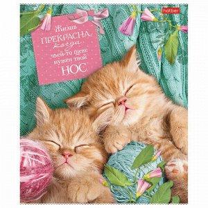 """Тетрадь А5, 40 л., HATBER, скоба, клетка, обложка картон, """"Без кота - жизнь не та"""" (5 видов), 40Т5В1"""