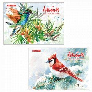 """Альбом для рисования А4 24 л., скоба, обложка картон, BRAUBERG, 202х285 мм, """"Райские птички"""" (2 вида), 105609"""