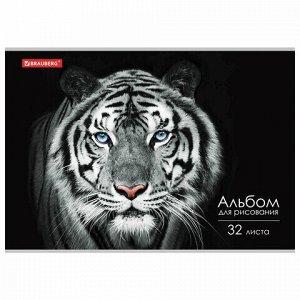 """Альбом для рисования А4 32 л., скоба, обложка картон, BRAUBERG ЭКО, 202х285 мм, """"Тигр"""" (1 вид), 105610"""