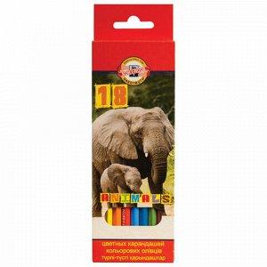 """Карандаши цветные KOH-I-NOOR """"Animals"""", 18 цветов, грифель 2,8 мм, заточенные, европодвес, 3553/18, 3553018008KSRU"""
