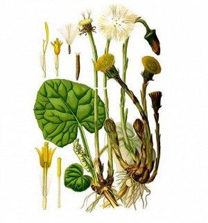 Мать-и-мачеха, листья, 50 гр,