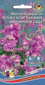 Цветы Маттиола двурогая (Ночная Фиалка) левкой лиловый (Марс) (сказочный аромат после захода солнца)