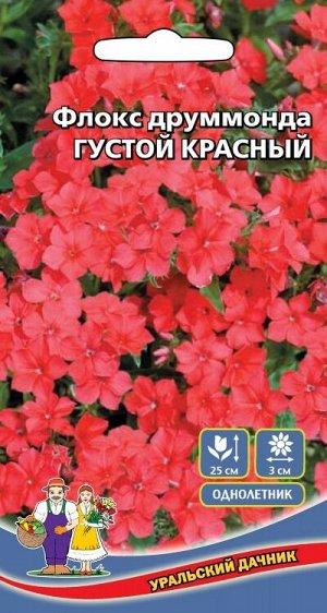 Цветы Флокс друммонда - Ред (Марс) (30-45 см, диаметр 3,5 см, пурпурно-красный)