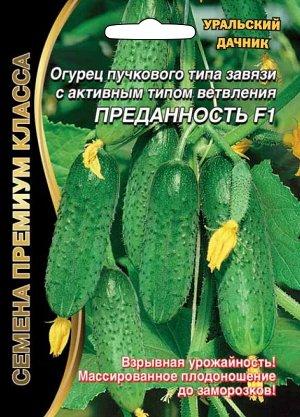 Огурец Преданность F1 (УД) (Холодостойкость и устойчивость растений к фитозаболеваниям способствуют высокой урожайности и в конце августа — сентябре — в некомфортных для многих гибридах условиях.После