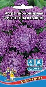 Цветы Астра пионовидная Фиолетовая Башня (УД) (до 65 см, 12-15 соцветий)