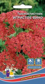 Цветы Тысячелистник Игристое вино (УД) (С крупными, красными, зонтиковидными соцветиями)