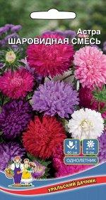 Цветы Астра Шаровидная Смесь (Марс) (соцветия 6-8 см, высокая холодостойкость)