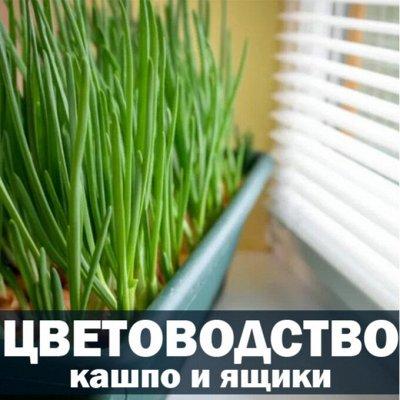 ❤Красота для Вашего дома: удобная кухня! — Цветоводство — Комнатные растения и уход