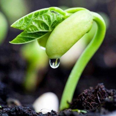 Семена агрофирмы Марс! Одежда и аксессуары. ДОБАВИЛИ НОВИНКИ — Горох, Бобы