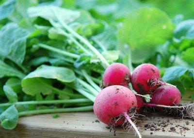 Семена агрофирмы Марс! Готовимся к дачному сезону! НАЛИЧИЕ — Редис И РЕДЬКА — Семена овощей