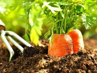 Семена агрофирмы Марс! Готовимся к дачному сезону! НАЛИЧИЕ — Морковь — Семена овощей