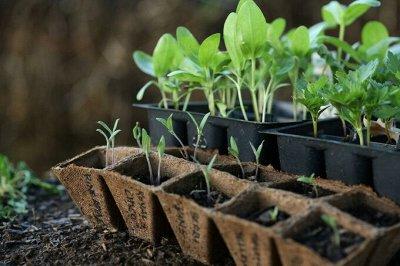 Семена агрофирмы Марс! Готовимся к дачному сезону! НАЛИЧИЕ — Набор Овощных Культур — Семена овощей