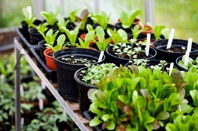 Подготовка к Дачному сезону🏡Семена овощей и цветов от 3руб   — Профессиональная Серия Гибридов от Селекционера — Семена овощей
