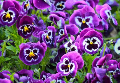 Семена агрофирмы Марс! Готовимся к дачному сезону! НАЛИЧИЕ — Цветы Двухлетние, Однолетние — Семена цветов