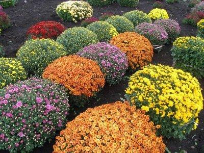 Семена агрофирмы Марс! Готовимся к дачному сезону! НАЛИЧИЕ — Цветы Многолетние — Семена многолетние