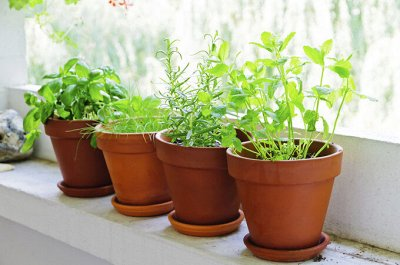 Семена агрофирмы Марс! Готовимся к дачному сезону! НАЛИЧИЕ — Цветы комнатные — Семена цветов