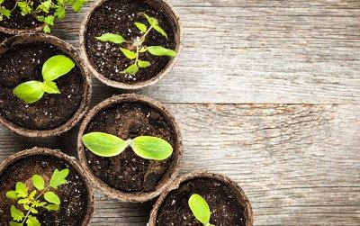 Подготовка к Дачному сезону🏡Семена овощей и цветов от 3руб   — Авторские семена — Семена