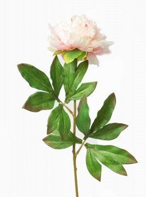 "Цветок ""Peony Plush"" Floox, 14х8х50 см, цв.розовый, комбинированные материалы"