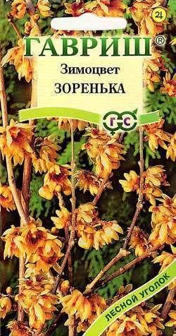 Зимоцвет ранний Зоренька (Химонант) 3 шт.